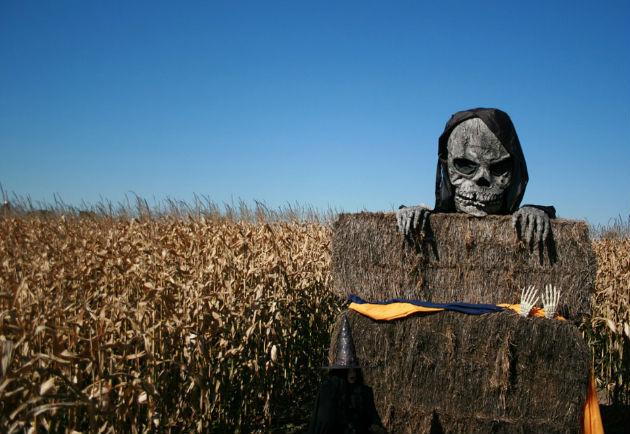 skeleton corn field