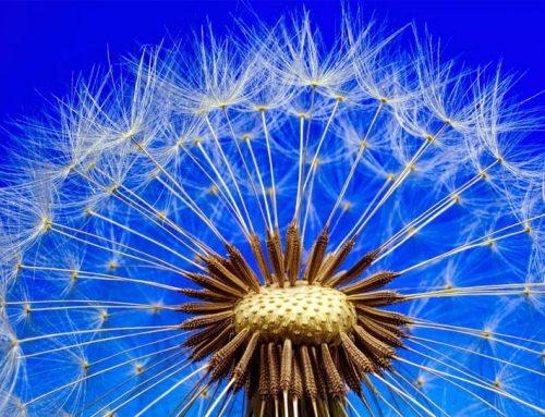 Tips on Surviving Allergy Season in Modesto